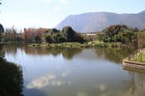蓝天下的湖水与树林