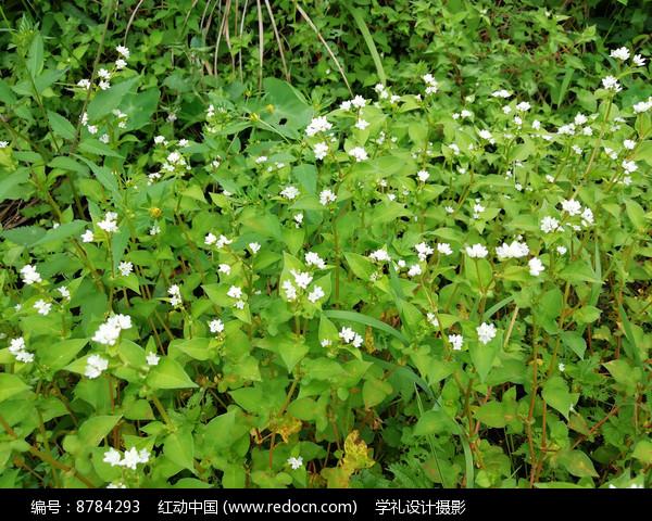 盛开的野花图片