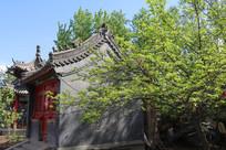 绿树仿古建筑
