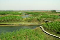 绿树景观桥