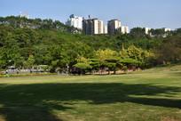 南宁石门森林公园草坪风光