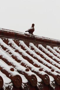农村房屋飘满雪花景象