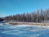 坝上防护树林