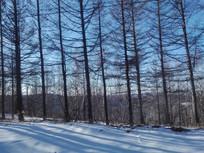 坝上树林光影