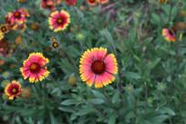 草丛里的粉红色小花
