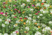 红黄白相间的鲜花