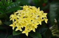 黄色野花花草