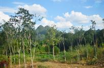 蓝天白云树木风景图片