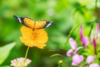 小憩的蝴蝶