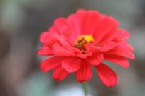虚幻的鲜花