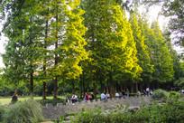 园林金色夕阳