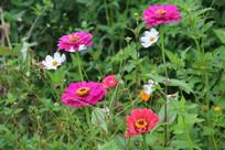 不同红色的鲜花