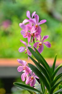 灿烂的花儿