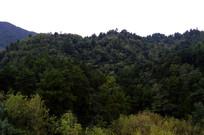 贵阳城市中的树林