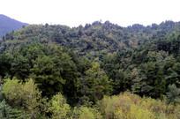 山上的树林