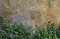 依傍石头而生的萼距花