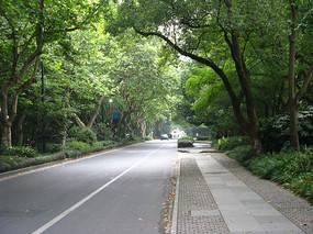 笔直的林荫大道