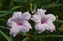 观赏花卉兰花草
