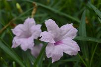 花期长的兰花草