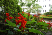 台北总督府的鲜花