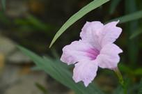 庭园美化植物兰花草
