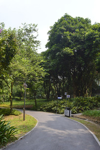 永泰乒乓体育公园林荫路
