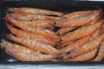 白肢虾拍摄图