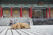 国家戏剧院门前的狗