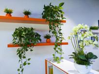 绿色空间设计
