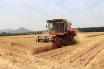 麦收时节收割机田野里收割小麦