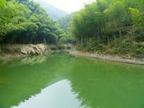 木坑竹海自然风景
