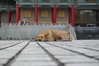 台北自由广场的狗