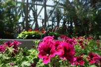 唐山世园会室内盆栽花