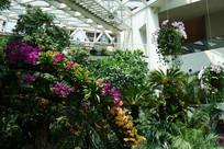 唐山世园会室内植物