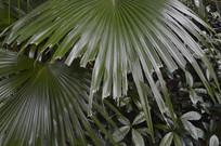 沼地棕摄影图
