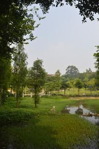 广州儿童公园绿化景观