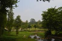 广州儿童公园绿植与小河