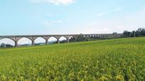 美丽的稻田田野风景图片