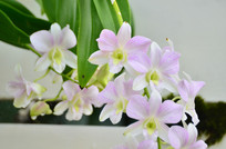 美丽的兰花花草图片