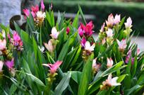 美丽的鲜花花卉
