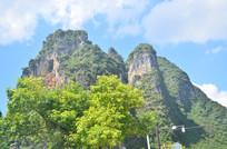 青山绿树风景图片