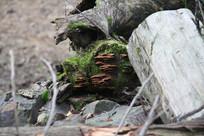 树干上青苔和菌类