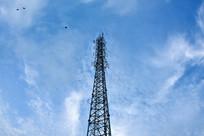 信号塔与飞鸟