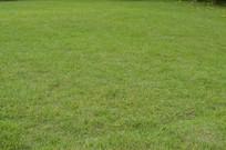 草地摄影图片