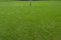 草坪草地青草地