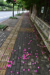 花瓣上的人行道