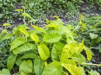 绿叶鲜蔬菜