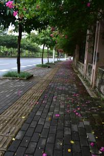 人行道上的花瓣