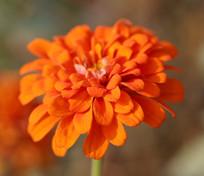 虚幻美丽的花