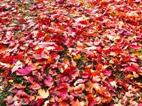 一大片红树叶